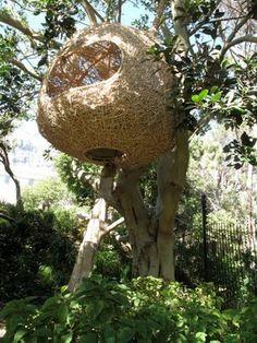 Porky Hefer of Animal Farm's giant weaver's nests. I need one for my garden. What a wonderful birdhide!!