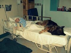 Dog with child in hospital bed  Source: Best Photos of the World