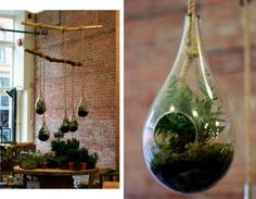Tear drop terrariums.  Another random idea for hanging at end of pews then transferred to tabletop shepherd hooks on some tables.