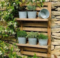 Wall mounted herb rack