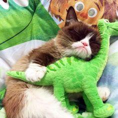 Grumpy cat is a fan of the good dinosaur