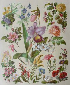 Antique Tiffany and Co art deco botanical print by PrimrosePrints