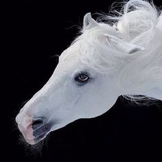 Pegasus-symbol of wisdom, became one symbol of the poetry and creator of sources in which poets come to draw inspiration. Carl Jung and his followers have seen in Pegasus a profound symbolic esoteric in relation to the spiritual energy that allows to access to the realm of the gods on Mount Olympus.