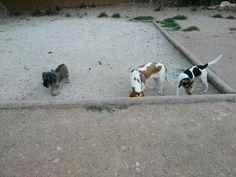 En el parque canino 07/16