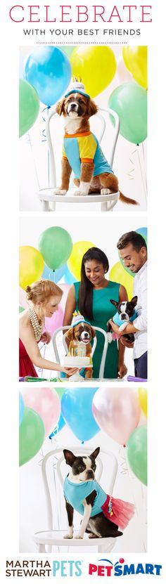 Introducing the #MarthaStewartPets Birthday Collection! Everything you need to celebrate with your best furry friends - only @petsmartcorp