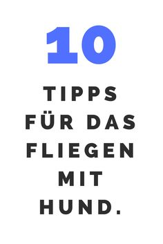 10 Tipps für das Fliegen mit Hund.