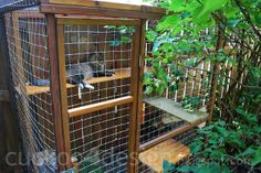 Outdoor cat enclosures.  Awesome idea for areas that aren't cat friendly. There's a cat door for them to come inside the house.