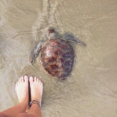 sea turtle and anklets.