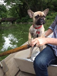 http://dogpictures.me - Dog Pictures. Oh, is it boating time. Frenchies got you covered