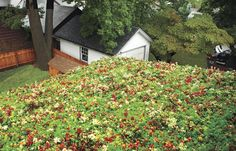 How to Install a Green Roof Cut energy bills and reduce the strain on the environment with a roof covered in sedums By Sal Vaglica of This Old House magazine Sedum Roof, Roofing Options, Living Roofs, Living Walls, Residential Roofing, Roof Architecture, Residential Architecture, Contemporary Architecture, Roof Repair