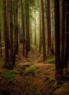 Henry Cowell Redwoods State Park, California, USA - This would be pretty incredible.