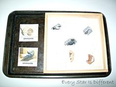 Paleozoic Era Dig & Identify Every Star Is Different: Montessori-inspired Time Line of Life Activities w/ Free Printables