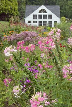 White Flower Farm's display gardens and retail store, August