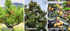 18 Ιδιαίτερα Δέντρα για να Μεταμορφώσετε Ευχάριστα έναν Μικρό Κήπο  την Αυλή Σας ! - share24.gr Vegetable Garden Design, Garden Landscaping, Backyard, Landscape, Architecture, Flowers, Diy, Garden Ideas, Trees