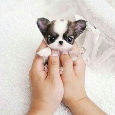 Omg So cute little puppy Tag your best friends below No...