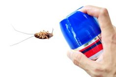 Do-It-Yourself Pest Control | Stretcher.com - Get rid of those critters without a pro