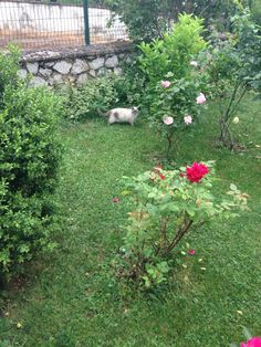 Bahçedeki prenses