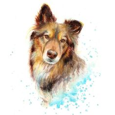 Pet Portrait pet memorial pet loss gift pet painting dog
