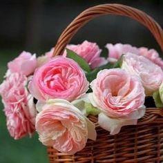 شدني للورد طيب وصفاء وبه الطهر وعنوان النقاء  #Flowers#flower#flowershop#Egflor