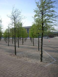 Royal Victoria Square, London - Tree Grid in Self Binding Gravel