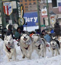 Best Spots to Watch the Iditarod Trail Sled Dog Race - Alaska Travel Blog by Princess Lodges