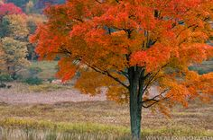 Canaan Valley State Park, West Virginia