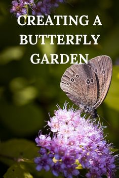 Tips for creating a butterfly-friendly garden, with 20 plants that are a great source of nectar for butterflies. Gardening For Beginners, Gardening Tips, Backyard Landscaping, Landscaping Ideas, Backyard Patio, Backyard Buildings, Garden Projects, Garden Ideas, Patio Ideas