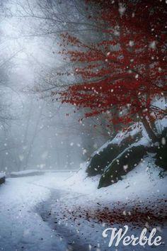 Merry Christmas Gif, Christmas Feeling, Eid Mubarak Wallpaper, Wedding Day Wishes, Beautiful Winter Scenes, Happy New Year 2014, Happy Birthday Video, Gif Photo, Holiday Signs