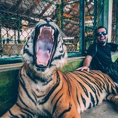Have you ever wanted to pet a tiger? ���� You can pet any size/age striped felines, at the Tiger Sanctuary in #Thailand ���� Call us to book your next trip to Thailand, or any destination getaway! ��✈️���� (949)459-2428 Looking forward to being your premier #TravelAgency ������ For any information at all on #traveling and #vacations please direct message me, or email at info@marinerstravel.com ��. And check out our website: Marinerstravel.com �� link is also in bio �� - - - #Travel…