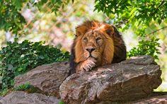 Μην ενοχλείτε τον Βασιλιά. Καλό απόγευμα γατάκια!