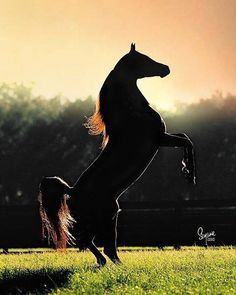 """I'll run like the river, I'll follow the sun, I'll fly like an eagle to where I belong.""  -Spirit: Stallion of the Cimarron <3"