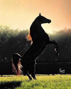 """I'll run like the river, I'll follow the sun, I'll fly like an eagle to where I belong.""  -Spirit: Stallion of the Cimarron <3"