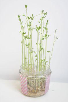DIY Petites plantes d'intérieur à faire pousser soi-même | Le Meilleur du DIY