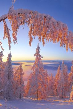Winter Magic, Winter Snow, Winter Time, Winter Photography, Landscape Photography, Forest Photography, Foto Macro, Winter Scenery, Winter Sunset
