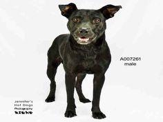 10/6/16 SL-- 09/13/16  CRITICAL!!  Perfect pup!! ROSENBERG, TX - *LONGEST RESIDENT* We mentioned last week…