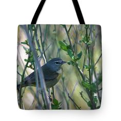 Orange-crowned Warbler Tote Bag featuring the photograph Orange-crowned Warbler by Debra Martz