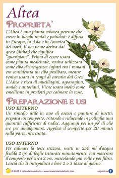 Altea Healing Herbs, Medicinal Plants, Magic Herbs, In Natura, Wellness Fitness, Green Life, Herbal Medicine, Food Hacks, Natural Health