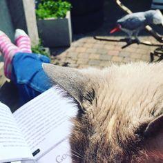 #relaxing #weekend #reading #cat #africangrey #parrot #sun #holland #garden by dlooije http://www.australiaunwrapped.com/