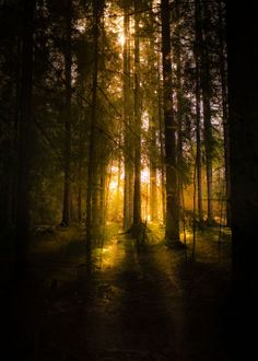 Dead Forest, Forest Light, Night Forest, Wooded Landscaping, Woods Photography, Night Aesthetic, Nature Pictures, Forest Pictures, Dark Wood
