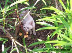 Gato en el jardín, cazando bichos.