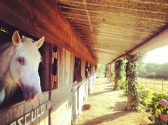 Clube de Campo de Galamares / The Bistro There are very few places I call heaven on earth... this place is one of them. If you love horses it is a must. but even if not, just go to have dinner...