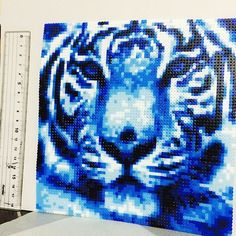 Tiger perler beads by tomybeads