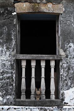 Escalona   Pinterest
