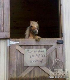 Horse-Shaming. LOL! ╔═╦╗╔╦╗╔═╦═╦╦╦╦╗╔═╗ ║╚╣║║║╚╣╚╣╔╣╔╣║╚╣═╣ ╠╗║╚╝║║╠╗║╚╣║║║║║═╣ ╚═╩══╩═╩═╩═╩╝╚╩═╩═╝