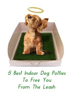 Dog potties are a good option for all pet owners, but especially if you work long hours, have an unpredictable schedule or live somewhere too hot, cold or wet. After doing a ton of research, I think these five dog potties are some of the best indoor dog potties available and the ones I recommend you try ... see more at PetsLady.com ... The FUN site for Animal Lovers