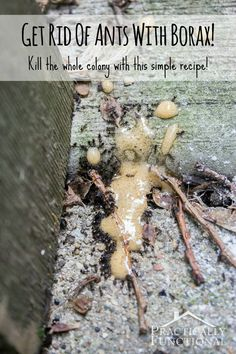How To Get Rid Of Ants: Kill the whole colony with borax and sugar. C powder sugar to C borax. maple syrup or honey to C borax. (Toxic if ingested, so place on a lid and remove before watering/rain if placing in garden. Diy Cleaning Products, Cleaning Hacks, Cleaning Solutions, Limpieza Natural, Get Rid Of Ants, Insecticide, Garden Pests, Do It Yourself Home, Pest Control