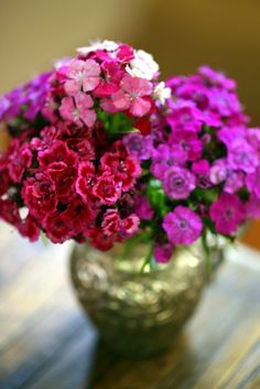 Sweet Williams ~ divine in all colors and incredibly long lasting in the vase!