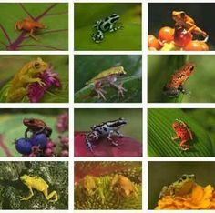 Toys & Hobbies Safari 6 Pfeilgiftfrösche Rana Frog Ranas Figuras Animals & Dinosaurs