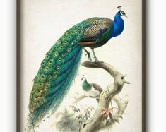 Shop Vintage Chinoiserie Style Peacock Poster created by Vintage_Republic. Peacock Wall Art, Peacock Bird, Peacock Pillow, Peacock Print, Chinoiserie, Vintage Bird Illustration, Bird Clipart, Vintage Birds, Vintage Wood
