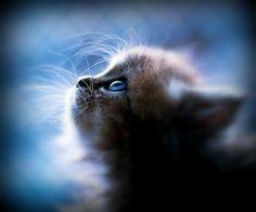 chat, chaton, pow wow, minet, mignon, poilu, greffier, félin, adorable, animal, maison, litière, bêtise